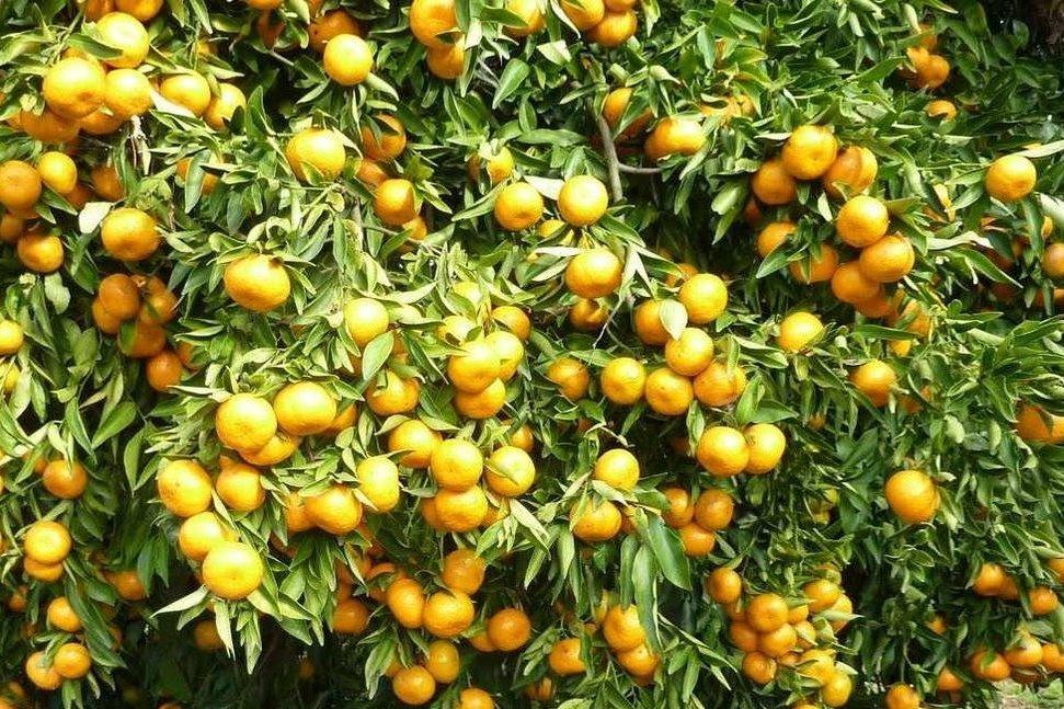 نکته های مهم جهت احداث باغ میوه با نهال مناسب