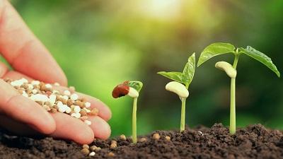 موارد مصرف کودها در کشاورزی و پرورش گیاهان