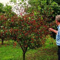 نیاز ماهانه درختان