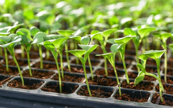 کاشت بذر چگونه باید انجام شود؟